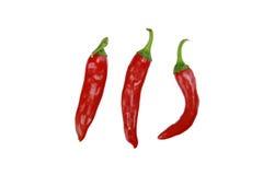 chili gorących odosobnionych pieprzy czerwony biel fotografia stock