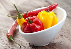 Chili and habanero in bowl Royalty Free Stock Photography