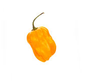 Chili habanero hottest pepper on white. Royalty Free Stock Images