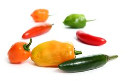 Chili Habanero Serrano hot mexican peppers Royalty Free Stock Photography