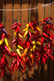 Chili hanging in bright sunshine Royalty Free Stock Photography