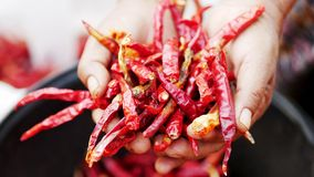 Chili that has been exposed to sunlight and has dried out royalty free stock images