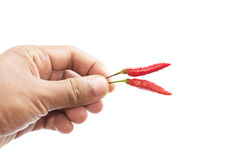 Chili in human hands. On a white background Stock Photography