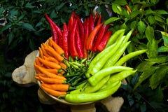 Chili i röd orange green Fotografering för Bildbyråer