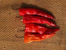 Chili i sol Royaltyfri Fotografi