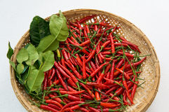 Chili ingredients preparation hot spicy oriental fresh concept Stock Images