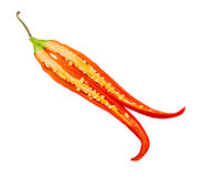 The chili on isolate background. Stock Images