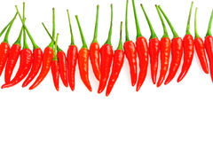 Chili in a line Stock Photography