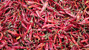 Chili Royalty Free Stock Photo
