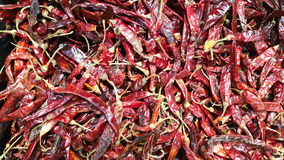 Chili. Many chili Royalty Free Stock Photography