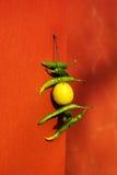 Chili och citron som hänger på fasaden Fotografering för Bildbyråer