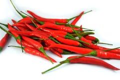 chili odizolowywająca pieprzowa czerwień Fotografia Stock