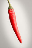 Chili Stock Image