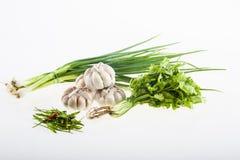 Chili, onions, garlic, coriander Stock Image
