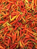 Chili padi Fotografia Stock