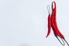 Chili Paper vermelho no fundo branco Imagens de Stock