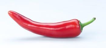 Chili Paprica Isolated rojo en fondo del blanco de A Imagenes de archivo