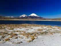 Chili Parinacota vulkan royaltyfri fotografi