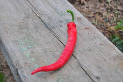 Chili peper on the wood royalty free stock image