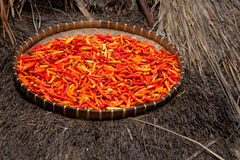 Chili pepper. Dry in the sun Stock Photography