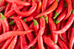 Chili pepper. Market vegetable, heap of red and spicy italian chili, natural aphrodisiac stock images