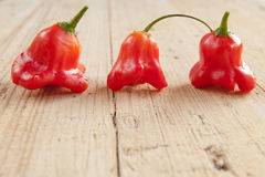 Chili pepper Stock Photos