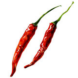 Chili pepper. Watercolor painting on white background Royalty Free Stock Photos
