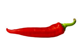 Chili pepper. Red chili pepper isolated on white Royalty Free Stock Photography