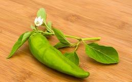 Chili Pepper, lizenzfreie stockfotografie