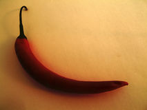 Chili pepper. Vintage illustration of single chili pepper on old paper Royalty Free Stock Photo