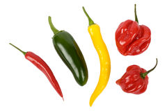 Chili pepper. On white background Stock Photos