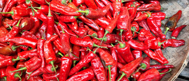 Chili pepper background Stock Photography