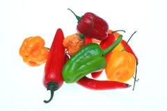 Chili pepper, Capsicum annuum. Several chili pepper, Capsicum annuum Royalty Free Stock Photo