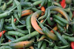 Green orange red chili pepper Stock Image