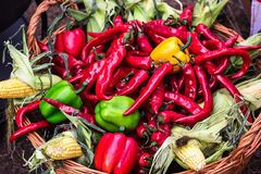 Chili pepper. Colorful mix of freshest and hottest chili peppers. Red Hot Chili Peppers in wooden basket with corn green and yello royalty free stock photos
