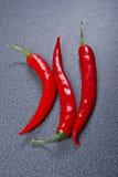 Chili pepper on dark background Stock Image