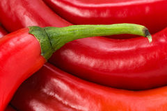 Chili Pepper encarnado Imagem de Stock Royalty Free