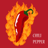 Chili pepper on fire. Chili pepper burning on fire - illustration of hot spicy food Stock Images