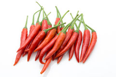 Chili (pepper) isolate on white background concept. Stock Images