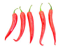 Chili pepper isolated Stock Photography