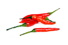Chili pepper isolated on white background Royalty Free Stock Photography