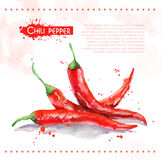 Chili pepper. Raw vegetable. Royalty Free Stock Images