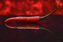 Chili pepper. A red chili pepper on a reflective surface Stock Photography