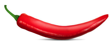 Chili Pepper rouge Photographie stock libre de droits