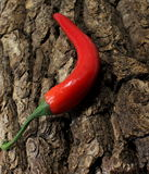 Chili pepper on a rough crust Stock Photos