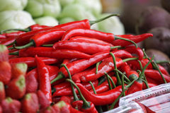 Chili pepper. Spread across the world, used in both food and medicine stock photography