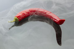 Chili pepper with steam Royalty Free Stock Photography