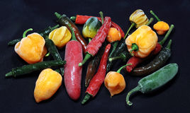 Chili pepper. Still life of mixed chili pepper Stock Photos