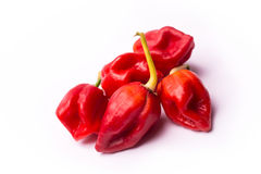 Chili pepper Trinidad Moruga Scorpion. On white background Royalty Free Stock Photo