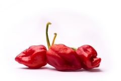 Chili pepper Trinidad Moruga Scorpion. On white background Stock Photography